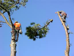 las vegas tree removal