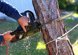 tree removal las vegas