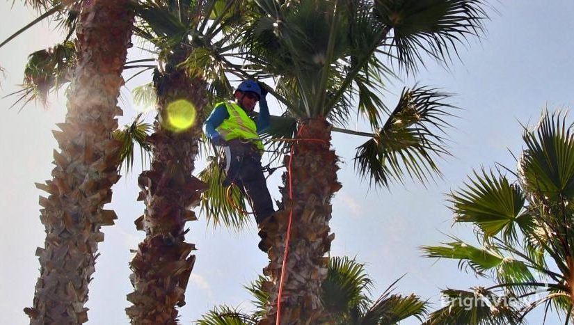 How To Find An Expert Palm Tree Removal Service Provider?